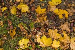Autumn Natural Arrangement Fotografía de archivo libre de regalías