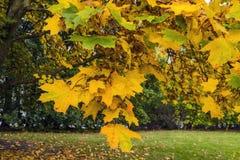 Autumn Natural Arrangement Royaltyfri Bild