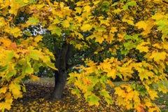 Autumn Natural Arrangement Royaltyfri Fotografi