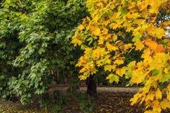 Autumn Natural Arrangement Imágenes de archivo libres de regalías