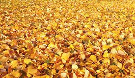 Autumn natural background royalty free stock images