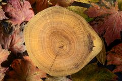 Free Autumn Natural Background. Cross Section Of The Tree And Dry Maple Leaves. Wood, Tree Rings Texture Royalty Free Stock Photo - 154057505