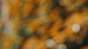 Autumn natural bokeh light background stock footage