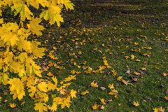 Autumn Natural Decor Imágenes de archivo libres de regalías
