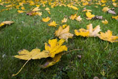 Autumn Natural Decor Arkivbilder