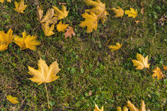 Autumn Natural Decor Arkivfoton