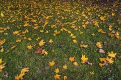 Autumn Natural Decor Fotografering för Bildbyråer