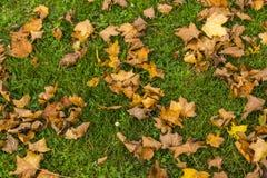 Autumn Natural Decor Royaltyfri Bild