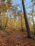 Autumn natural fir forest in Rheinland Pfalz. Autumn natural fir forest in Rheinland-Pfalz region Stock Photos