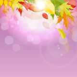 Autumn Natural Leaves Background brillant Illustration de vecteur Photos libres de droits