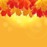 Autumn Natural Leaves Background brillant Illustration de vecteur Image stock