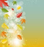 Autumn Natural Leaves Background brillante Vector Fotografía de archivo libre de regalías