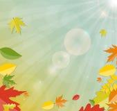 Autumn Natural Leaves Background brillante Vector Foto de archivo libre de regalías