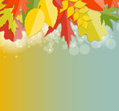 Autumn Natural Leaves Background brillante Vector Fotos de archivo libres de regalías
