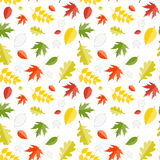 Autumn Natural Leaves Seamless Pattern brillante Imagenes de archivo