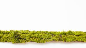 The moss on the bark of a tree on a white background. Place for text. Royalty Free Stock Photos