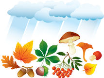 Autumn natural objects. Autumn natural leaves, mushrooms, chestnut, acorn and ashberry Royalty Free Stock Images