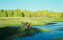 Autumn natural pasture Royalty Free Stock Images