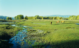 Autumn natural pasture Stock Image