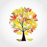 Autumn Natural Tree Background brilhante Vetor Fotografia de Stock Royalty Free
