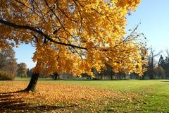 Autumn nature Stock Photos