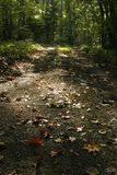 Autumn nature Stock Image