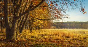 Autumn nature background. Colorful trees on golden meadow. Red and yellow foliage. Scenic nature. Fall. Stock Photos