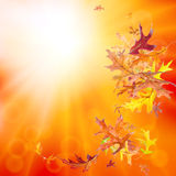 Autumn nature background Royalty Free Stock Photography