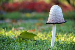 Autumn nature background with mushroom Royalty Free Stock Photo