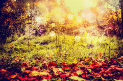 Autumn nature background with red fallen leaves, wild grass and trees bush with sun light and bokeh Royalty Free Stock Photography