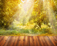 Autumn nature background with wooden terrace and fall tree Stock Images