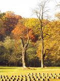 Autumn in the nature Royalty Free Stock Photography