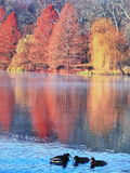 Autumn in nature Royalty Free Stock Images