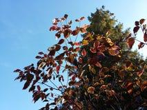 Autumn in nature Stock Photo