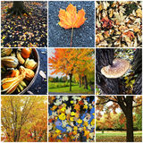 Autumn nature collage Stock Photography