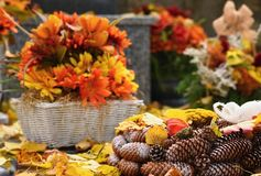 Autumn nature concept.Beautiful autumn decorations. Colorful autumn flowers at the cemetery - Halloween. Royalty Free Stock Photo