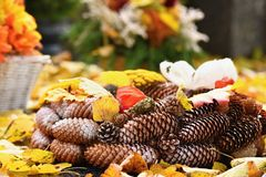 Autumn nature concept.Beautiful autumn decorations. Colorful autumn flowers at the cemetery - Halloween. Royalty Free Stock Image