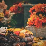 Autumn nature concept.Beautiful autumn decorations. Colorful autumn flowers at the cemetery - Halloween. Royalty Free Stock Photos