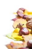 Autumn nature concept. Fall fruit and vegetables Royalty Free Stock Photos