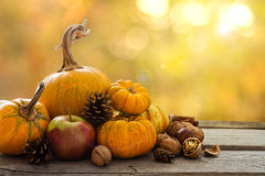 Autumn nature concept. Fall fruit and vegetables on wood. Thanksgiving dinner. Blur background, light effect Stock Photos