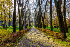 Autumn Nature en parque Foto de archivo libre de regalías