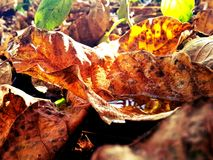 Best Autumn Stock Images