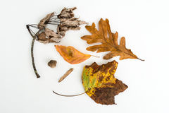 Autumn Nature Fall Mix Stockbild