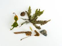 Autumn Nature Fall Mix Lizenzfreie Stockfotografie