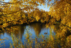 Autumn nature in fall season. Beautiful nature landscape, golden trees in sunny day in fall season stock photography