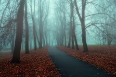 Autumn nature - foggy autumn view of autumn park alley in dense fog Stock Image