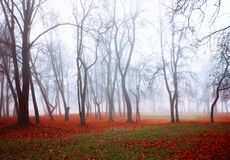 Autumn nature landscape - foggy autumn view of autumn park in dense fog. Autumn nature - foggy autumn view of autumn park in dense fog. Autumn foggy landscape royalty free stock images