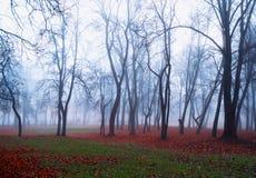 Autumn nature landscape - foggy autumn view of autumn park in dense autumn fog. Autumn nature - foggy autumn view of autumn park in dense fog. Autumn foggy stock image
