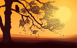 Autumn Nature Landscape Background ligero colorido Fotos de archivo