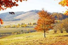 Autumn nature landscape Royalty Free Stock Photos